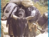 Climbing Mt. Everest — Mike McDonald